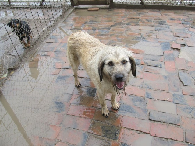 JULIA, F-X, née 2013 - 17 kg - Adorable (BELLA) Prise en charge SPA PONTARLIER 18_05230