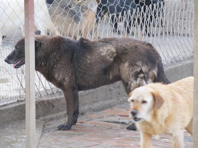 TZRNA I, F-X, née 2005, 18 kg (BELLA) - Prise en charge ASSO DES PATOUNES POUR LA VIE 18_05264