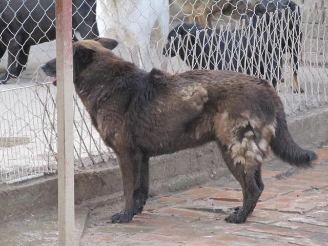 TZRNA I, F-X, née 2005, 18 kg (BELLA) - Prise en charge ASSO DES PATOUNES POUR LA VIE 18_05265