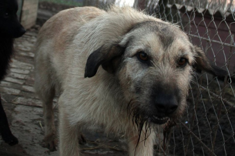 JULIA, F-X, née 2013 - 17 kg - Adorable (BELLA) Prise en charge SPA PONTARLIER 24_03232