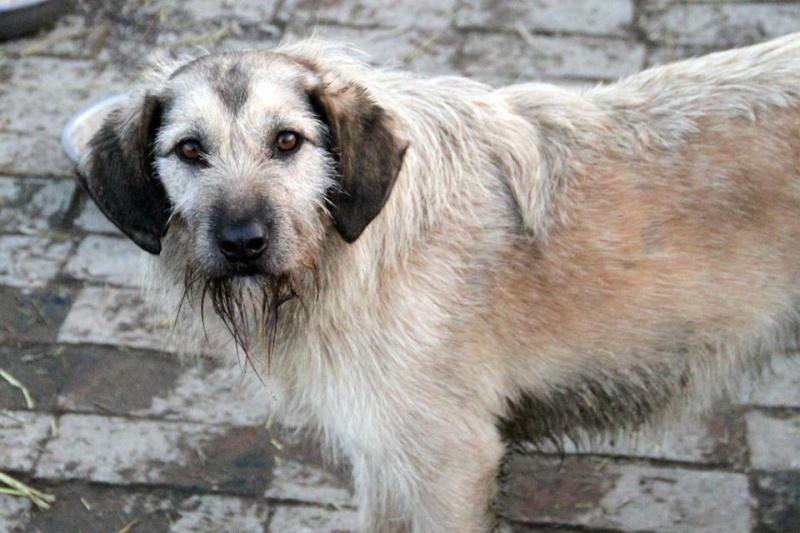 JULIA, F-X, née 2013 - 17 kg - Adorable (BELLA) Prise en charge SPA PONTARLIER 24_03233