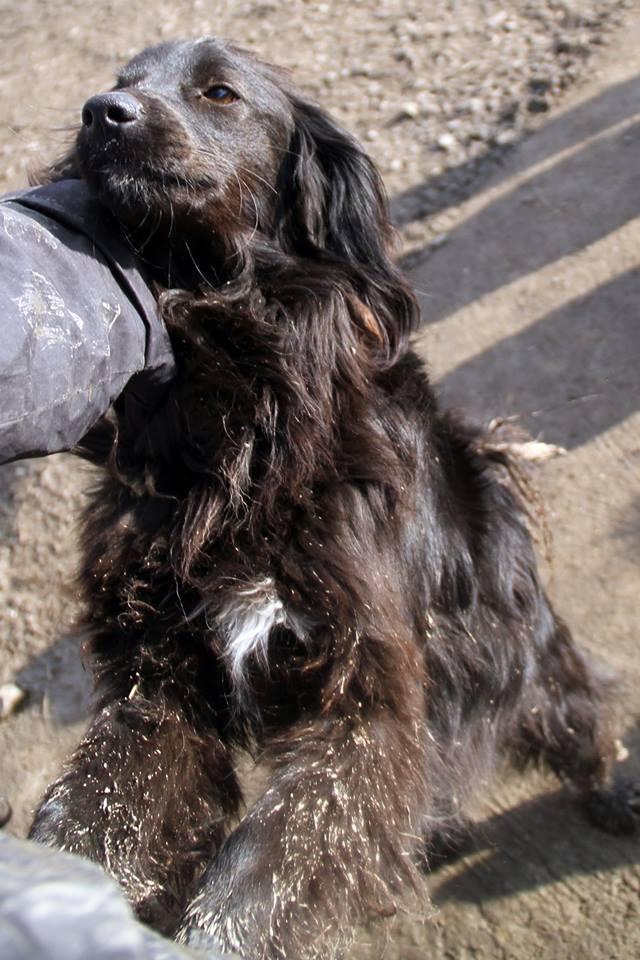 DECHKO II, M-X épagneul, né 2014, 13 kg - Sympa (BELLA) Pris en charge Ferme des Rescapés - Page 2 24_03_42