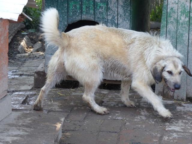 JULIA, F-X, née 2013 - 17 kg - Adorable (BELLA) Prise en charge SPA PONTARLIER Mai_2061
