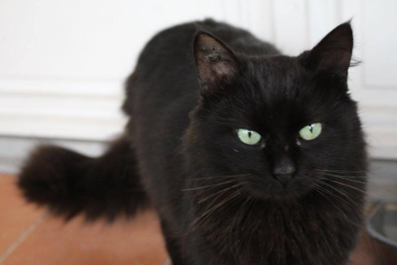 LOUSTIC, chat noir (13) 12888610