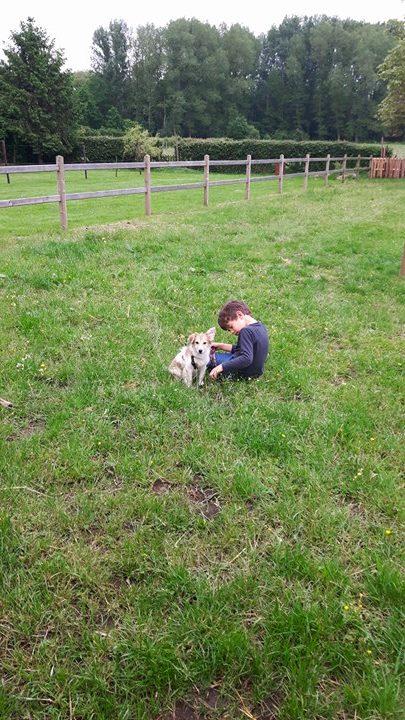 CERES, chiot femelle, née en janvier 2016 - REMEMBER ME LAND - adoptée par Laurie (Belgique) - Page 3 Ceres_11