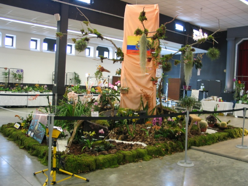 Exposition internationale d'orchidées à Feurs (Loire) 23 et 24 avril 2016 Feurs_10