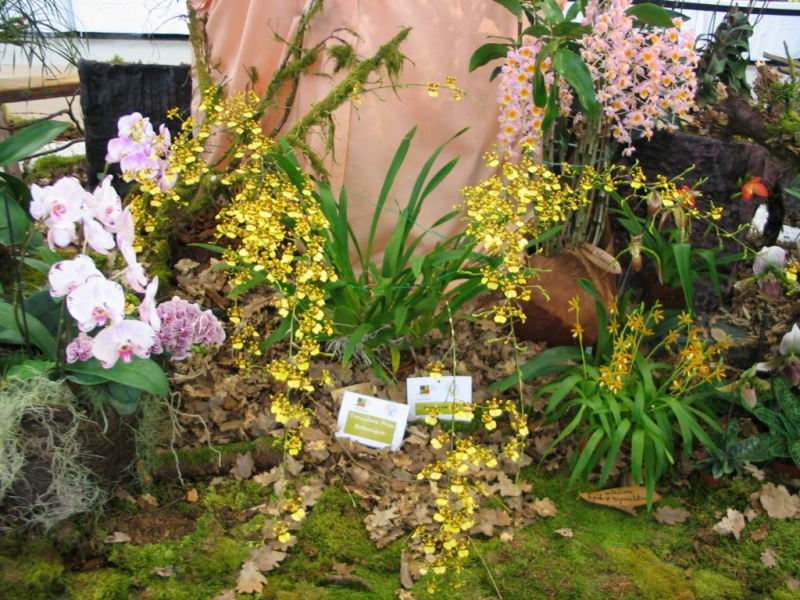 Exposition internationale d'orchidées à Feurs (Loire) 23 et 24 avril 2016 Sphac10