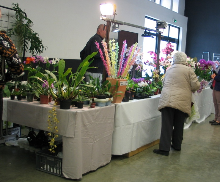 Exposition internationale d'orchidées à Feurs (Loire) 23 et 24 avril 2016 Stand_13