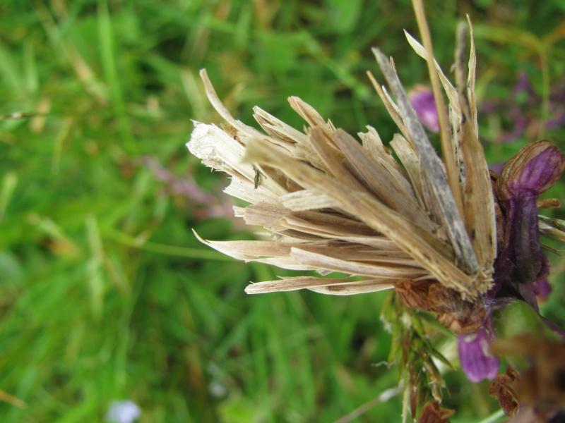 Larve sous morceaux d'herbe sèche Img_5910