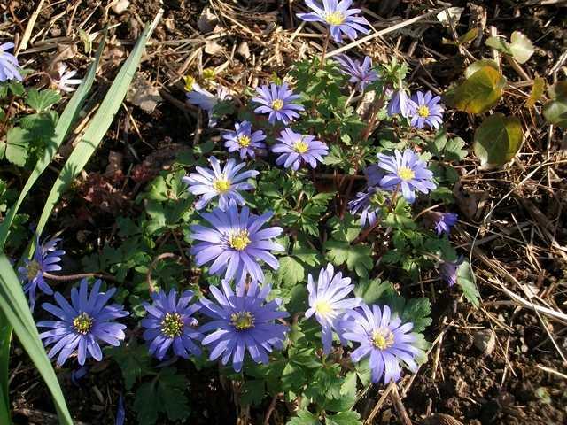 Blue..........bleu !!! - Page 3 Imgp0023