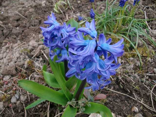 Blue..........bleu !!! - Page 3 Imgp0024