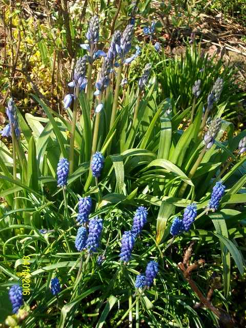 Blue..........bleu !!! - Page 5 Imgp0055