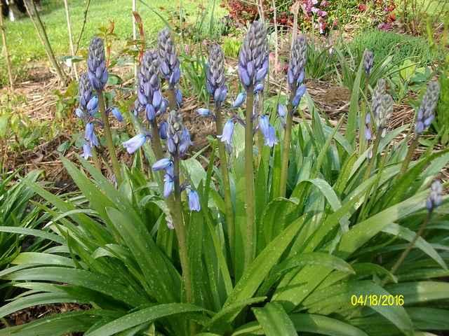 Blue..........bleu !!! - Page 5 Imgp0056