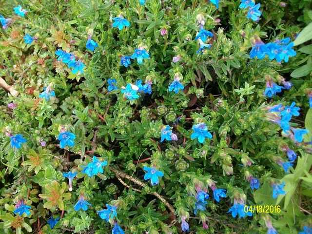 Blue..........bleu !!! - Page 5 Imgp0057