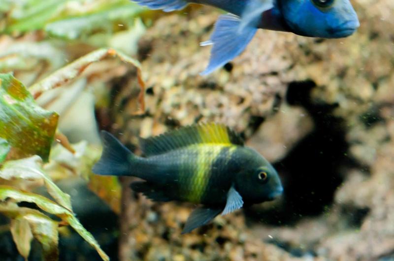 Votre poisson préféré ...  Dsc_9911