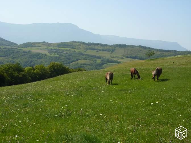 Pension au pré en troupeau à 20 min de Grenoble  E00cf910
