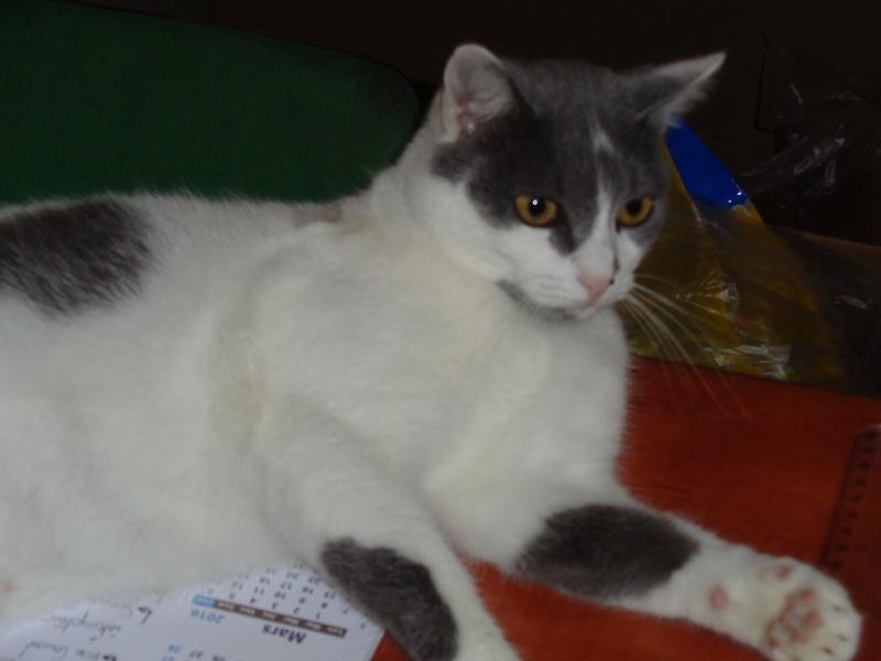 Louise, petit trésor aux yeux d'émeraude Dsc00011