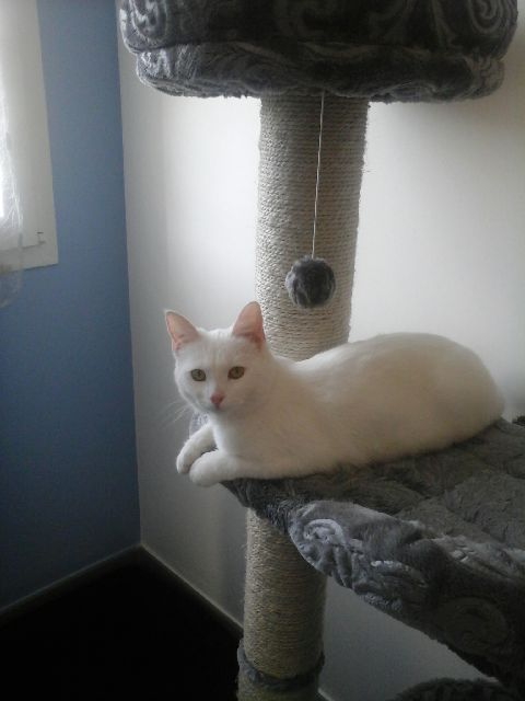 (Melle) Coco, adorable chatte de 6 mois Img_0110
