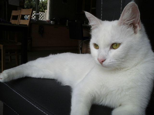 (Melle) Coco, adorable chatte de 6 mois Img_0111