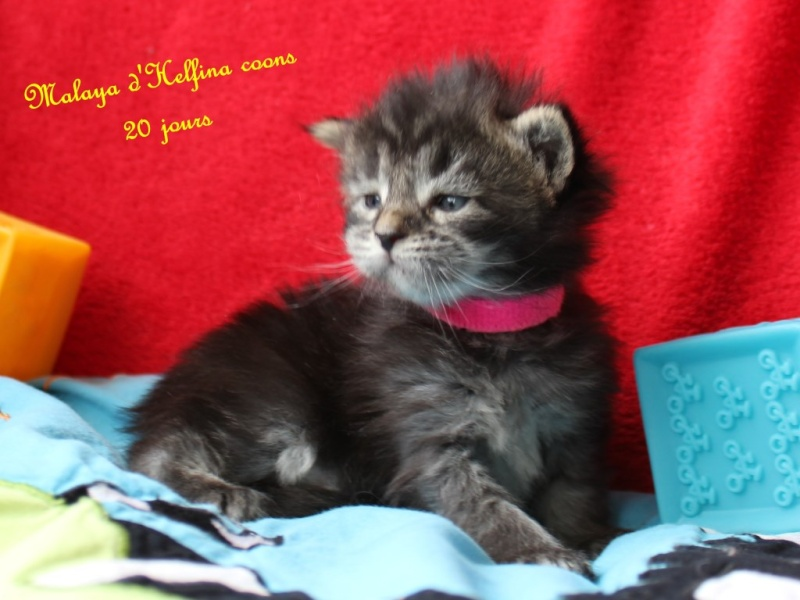 CHATONS A RESERVER 2016_011