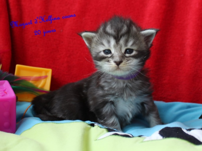 CHATONS A RESERVER 2016_012