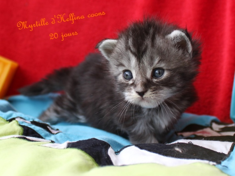 CHATONS A RESERVER 2016_015