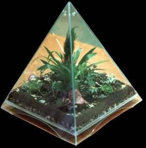 Практическое применение пирамиды для растениеводства. Aea-a-10