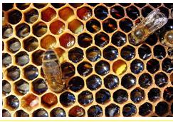 5 полезных свойств меда для нашего организма Yzaa135