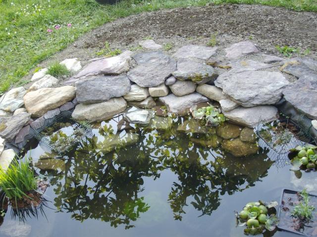 Aide filtration naturelle pour bassin extérieur  - Page 2 Imgp0115