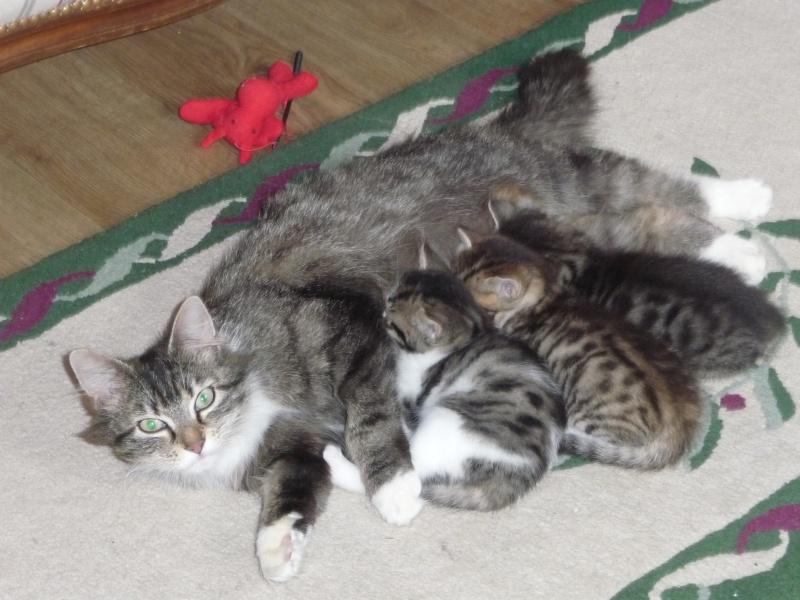 Les bébés de Willow - Page 2 P1040733