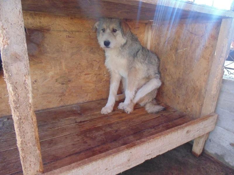 VANILLE, née 2013, 15 kgs (ORASTIE/FOURRIERE) - Prise en charge Refuge d'Arthaz (départ74) 12472710