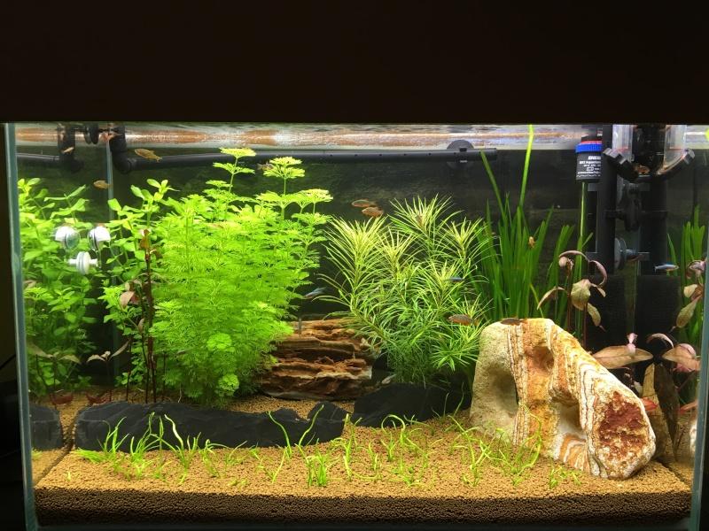 Identification plantes  Img_3412