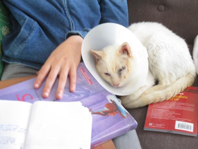 """lancome - Lancôme, jeune chat mâle crème """"red point"""", né en novembre 2015, EN DON LIBRE Img_4411"""
