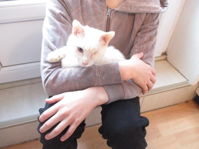 """lancome - Lancôme, jeune chat mâle crème """"red point"""", né en novembre 2015, EN DON LIBRE Img_4516"""