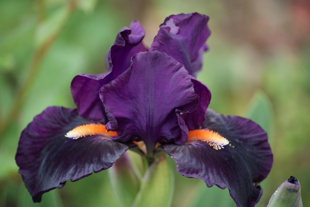 Iris 'Imperative' - Paul Black 1997 01610