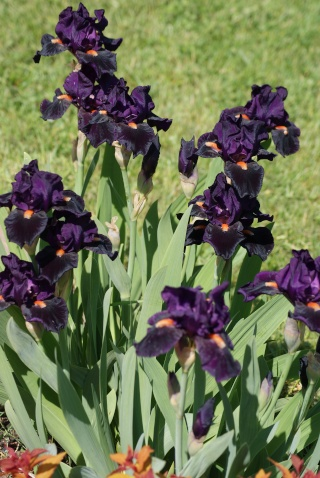 Iris 'Imperative' - Paul Black 1997 08711
