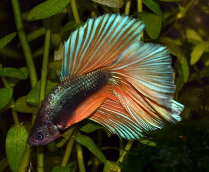 mon aquarium qui n'attend plus que ses poissons... Dsc_0014