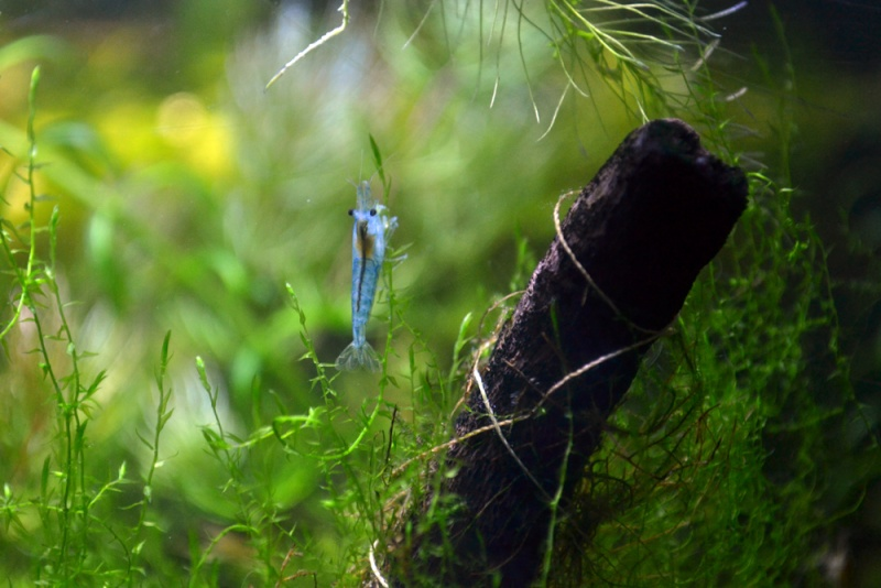 mon aquarium qui n'attend plus que ses poissons... Dsc_0015