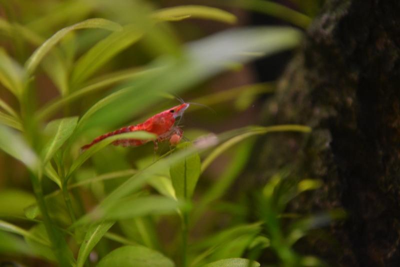 mes petites crevettes ^^ Dsc_0032