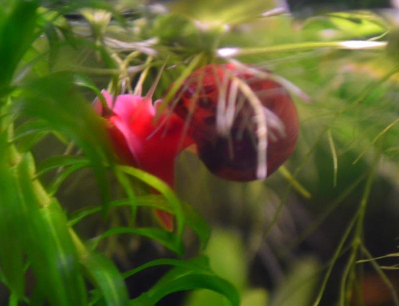 1er aquarium Dsc_0041