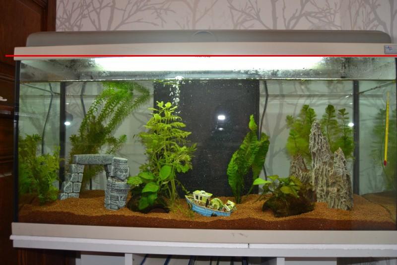 1er aquarium Dsc_0042