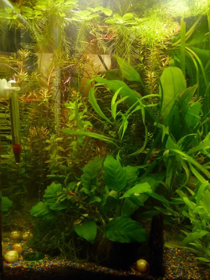 Projet nano 60l crevettes + poissons: besoin de conseils pour la population ! P1130813