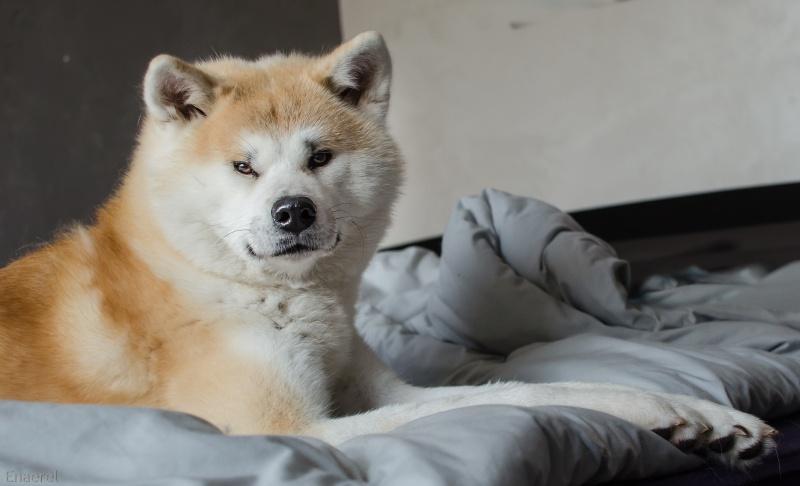 [fil ouvert] Les chiens, nos amis Dsc_0422