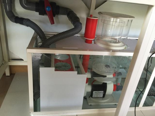 Mon premier recifal 540 litres ( ex Tanga) Image31