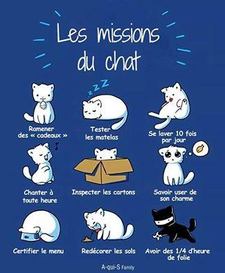 Images du jour sur les chats - Page 20 12670610