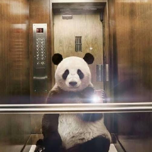 Bonjour de la part de Panda31 - Page 2 12036310