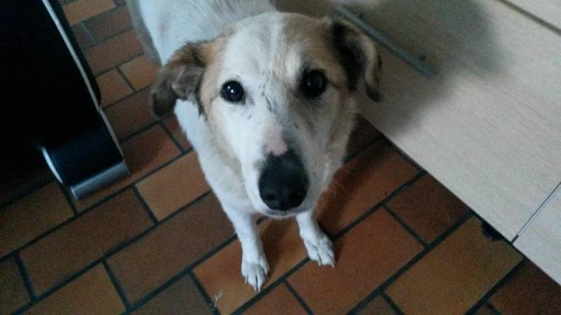 FATA, née le 12/06/2009, arrivée chiot au refuge (soeur de Mickey et fille de Tara) - en FA dans le 49 - GARANT - SOS -R-FB-SC-30MA - Page 6 12932610