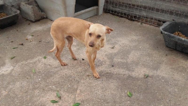 CINDY, petite chienne 35 cm 4 ans 13043611