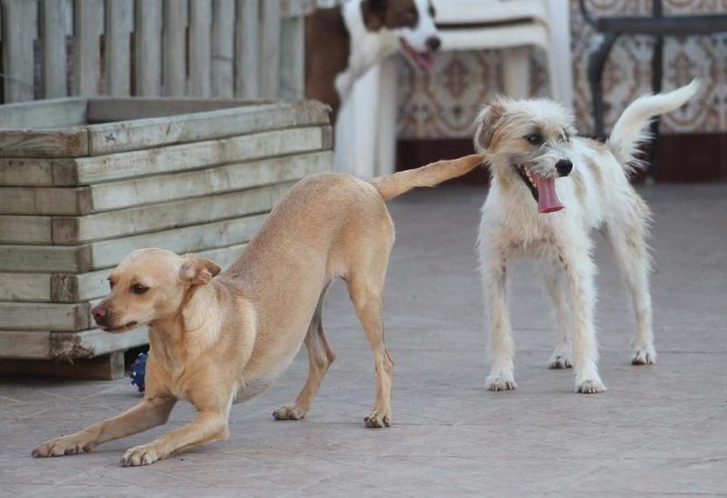 CINDY, petite chienne 35 cm 4 ans 13062210