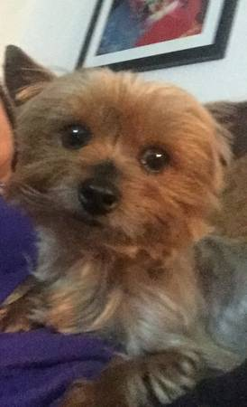 CAN YOU HELP ME FIND MY LIL' DAISY? Nola410